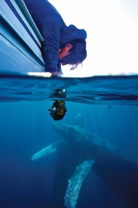 This time of year, there's much to see and do in Los Cabos, including whale watching. Photo Courtesy Cabo Expeditions