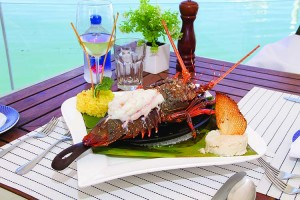 baja-lobster-MV-IMG_1802-2