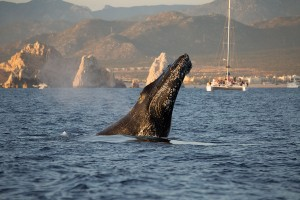 whale-cabo-boat-land-ortiz_4825-2