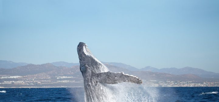 The great experience of whale watching – LCM 52 Spring 2020