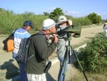 Birding Los Cabos