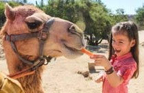 Camel Quest