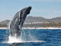 The Big Time – Whales!